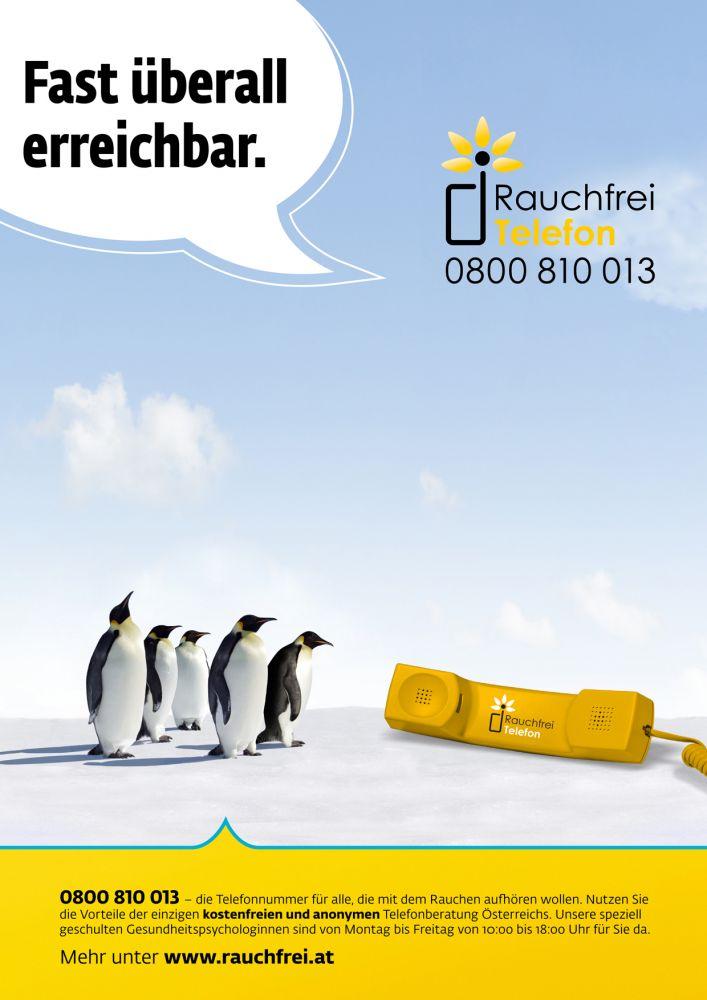 poster_pinguine_bild